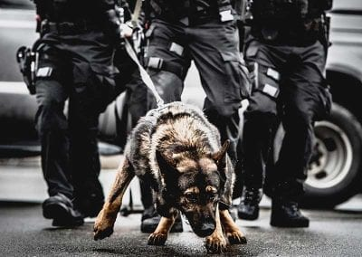 Integration of SWAT and Canine
