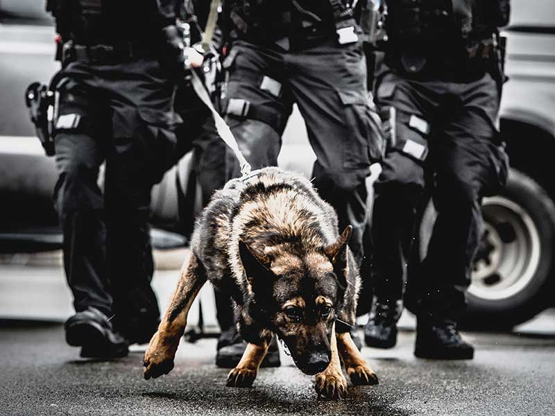 Integration of SWAT and Canine: The Evolution of K9