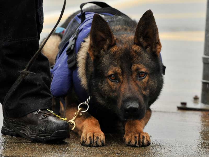 Bridgeport Police Dog Finds Missing 9-Year-Old Boy With Special Needs
