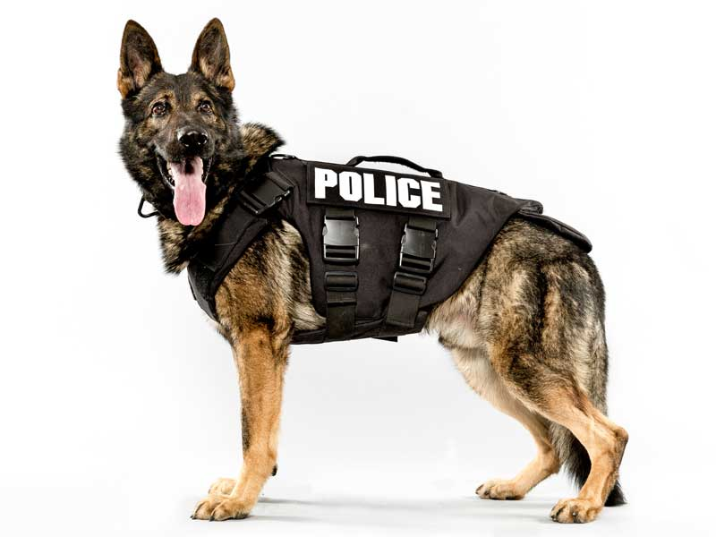 Stafford County Sheriff's Received K9 Body Armor