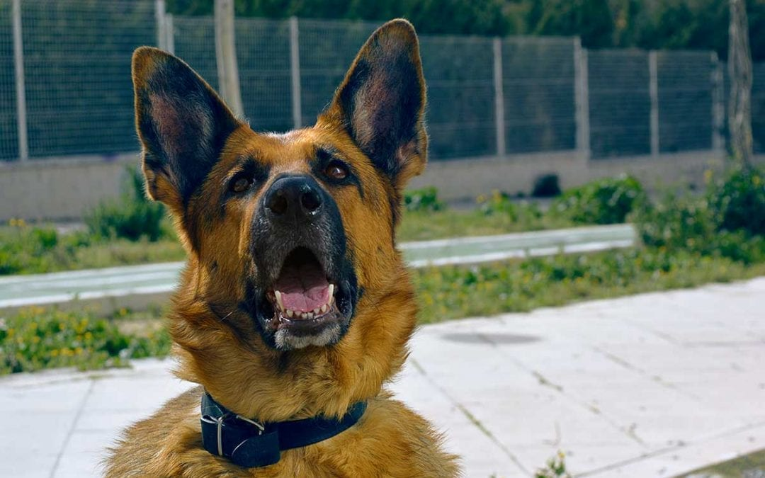 Cunning Canine Mike Wins the Top UK Police Dog Title