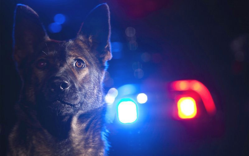 Would-be Carjacker Tracked by K9,  Arrested in South Jordan