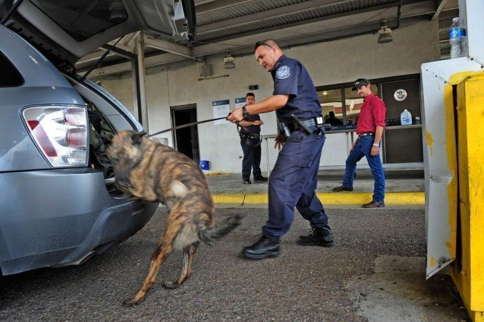 Shelter Dog Finds True Calling As Police K-9