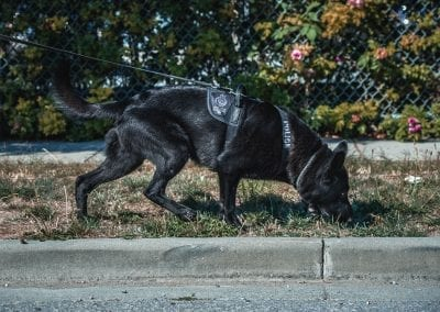 Applying Science to the Art  of Detection Canines