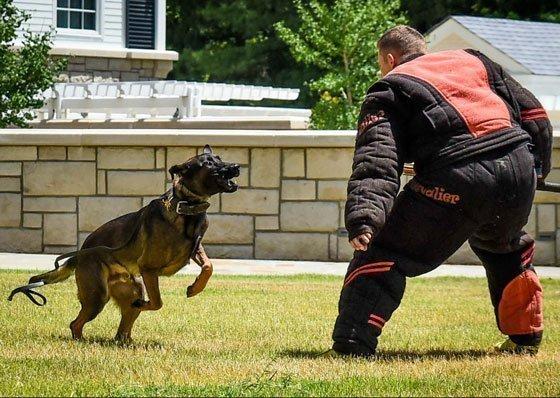 Dog Training Bite Suit