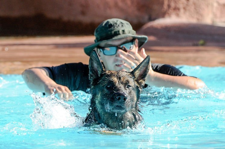 Local K9 Units Train at Adventure  Island Water Park