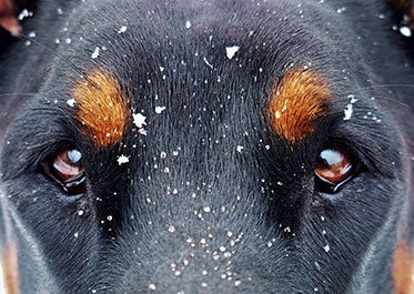 Vet Check – Cold Weather Tips