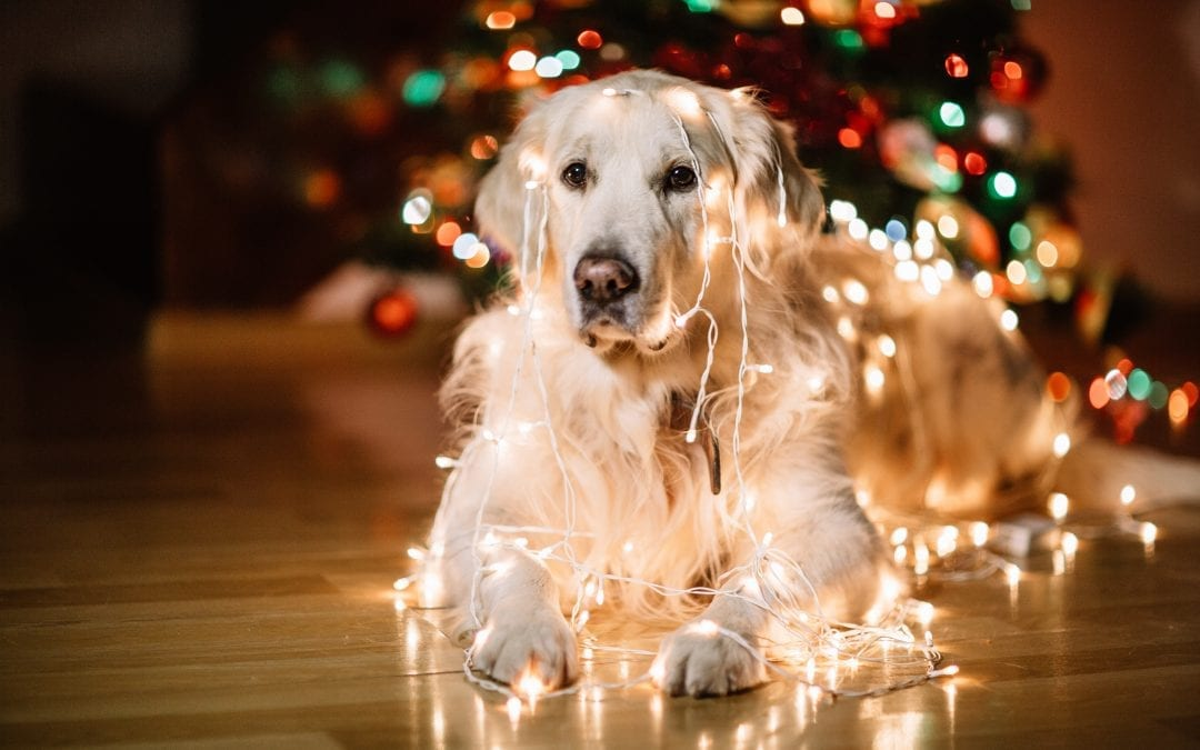 K9 Tips on Tuesdays: Decorating for the Holidays