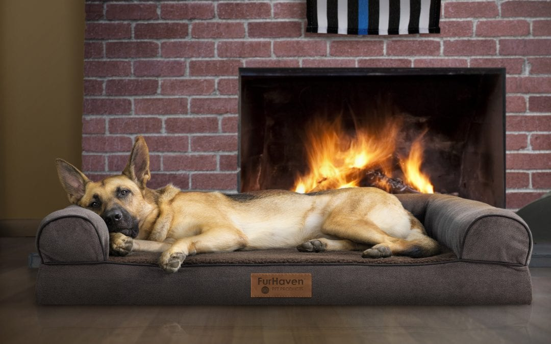 K9 Tips on Tuesdays: Fireplace Weather