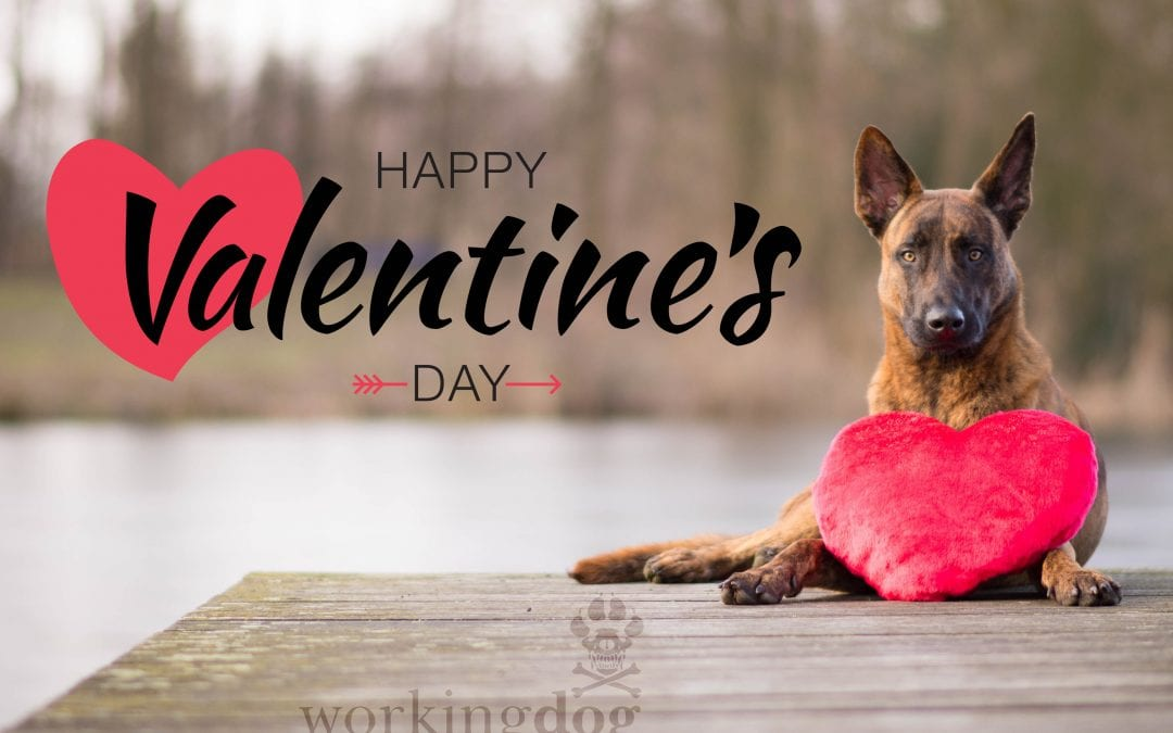 K9 Tips on Tuesdays: Valentine's Day Chocolate