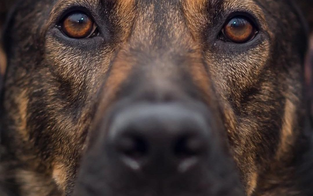 May is the Month to Have Your K9's Eyes Checked