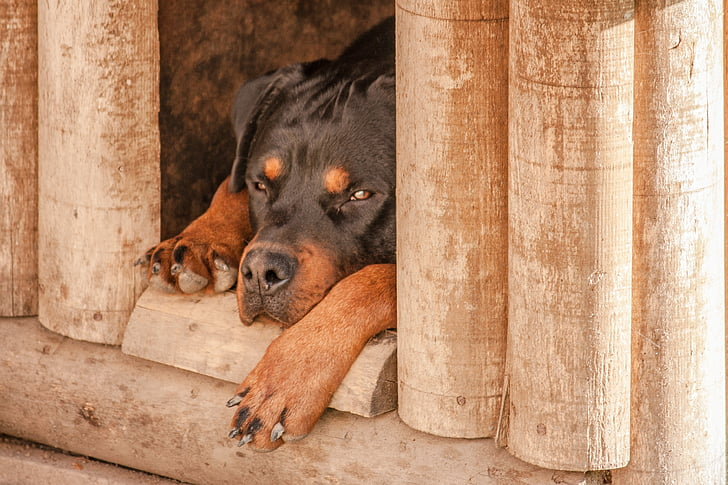 K9 Tips on Tuesdays: Doghouse Protection